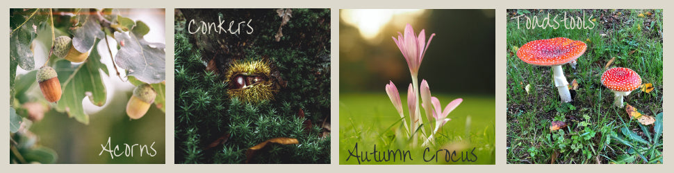Autumn Hazards for pets - Acorns, Conkers, Autumn Crocus and Toadstools