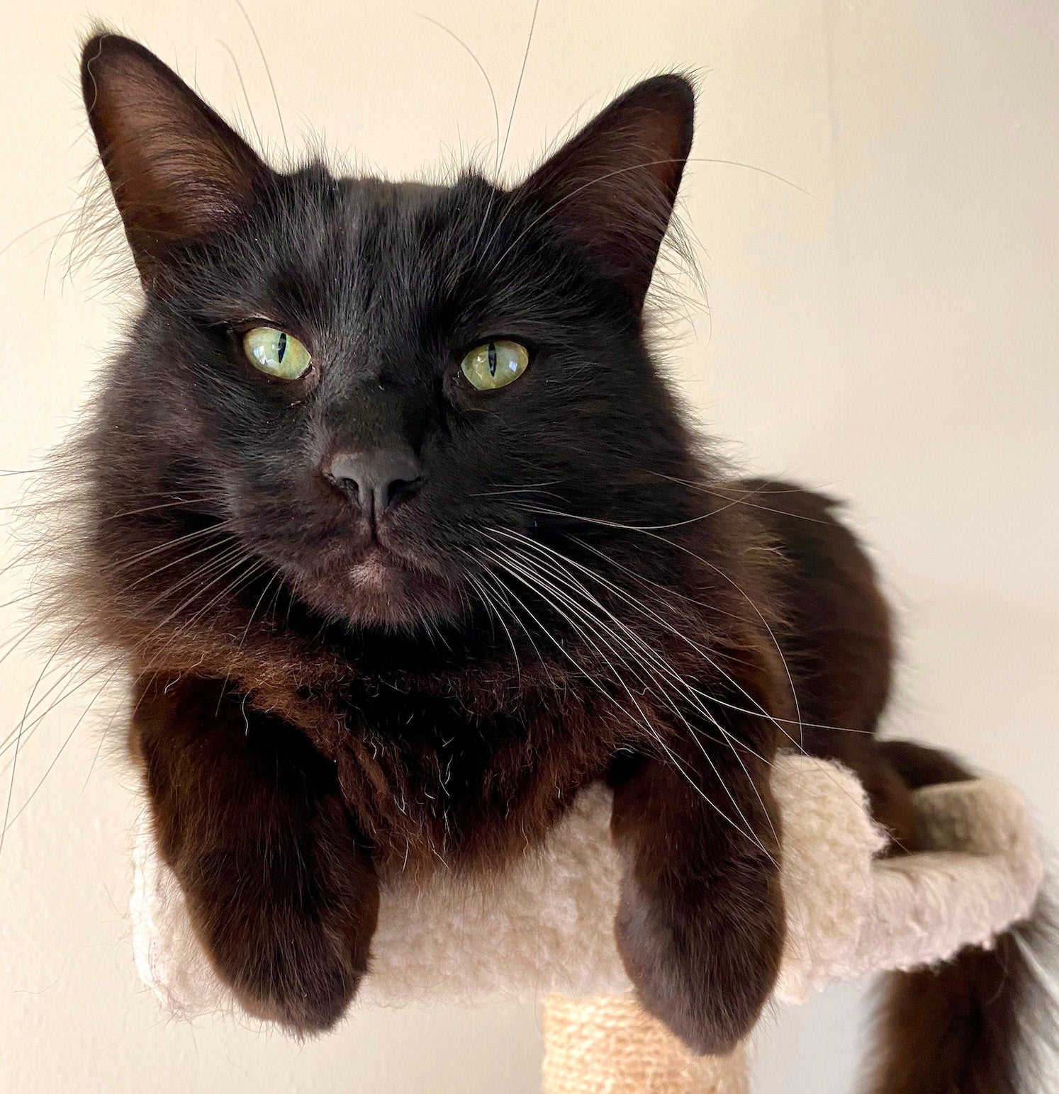 Black cat lying on a platform on a cat tree