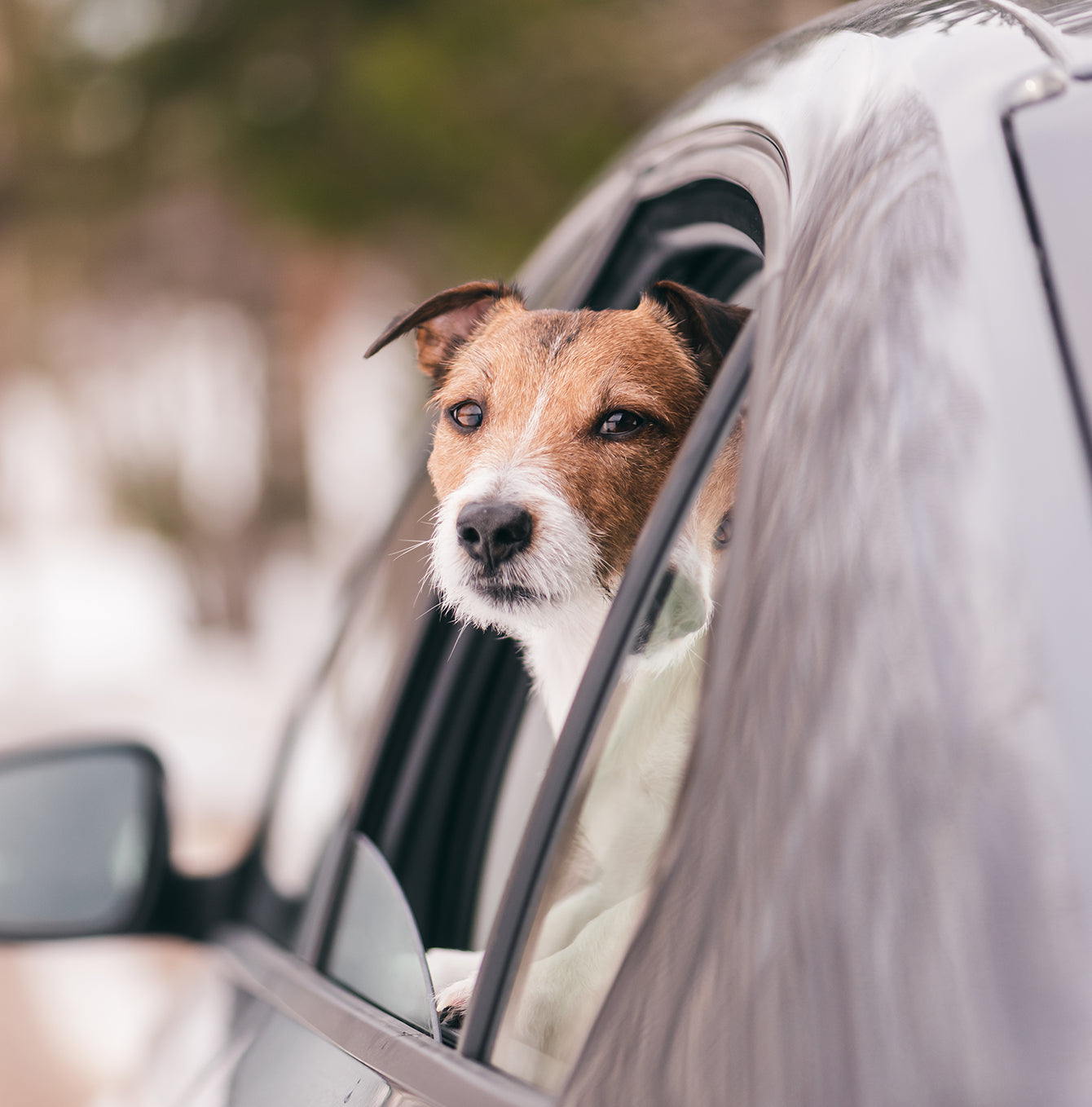 Bringing Your Puppy Home [image: https://cdn