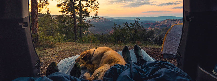 Dog sleeping in the back of a camper van with a tent in the background and a setting sun.