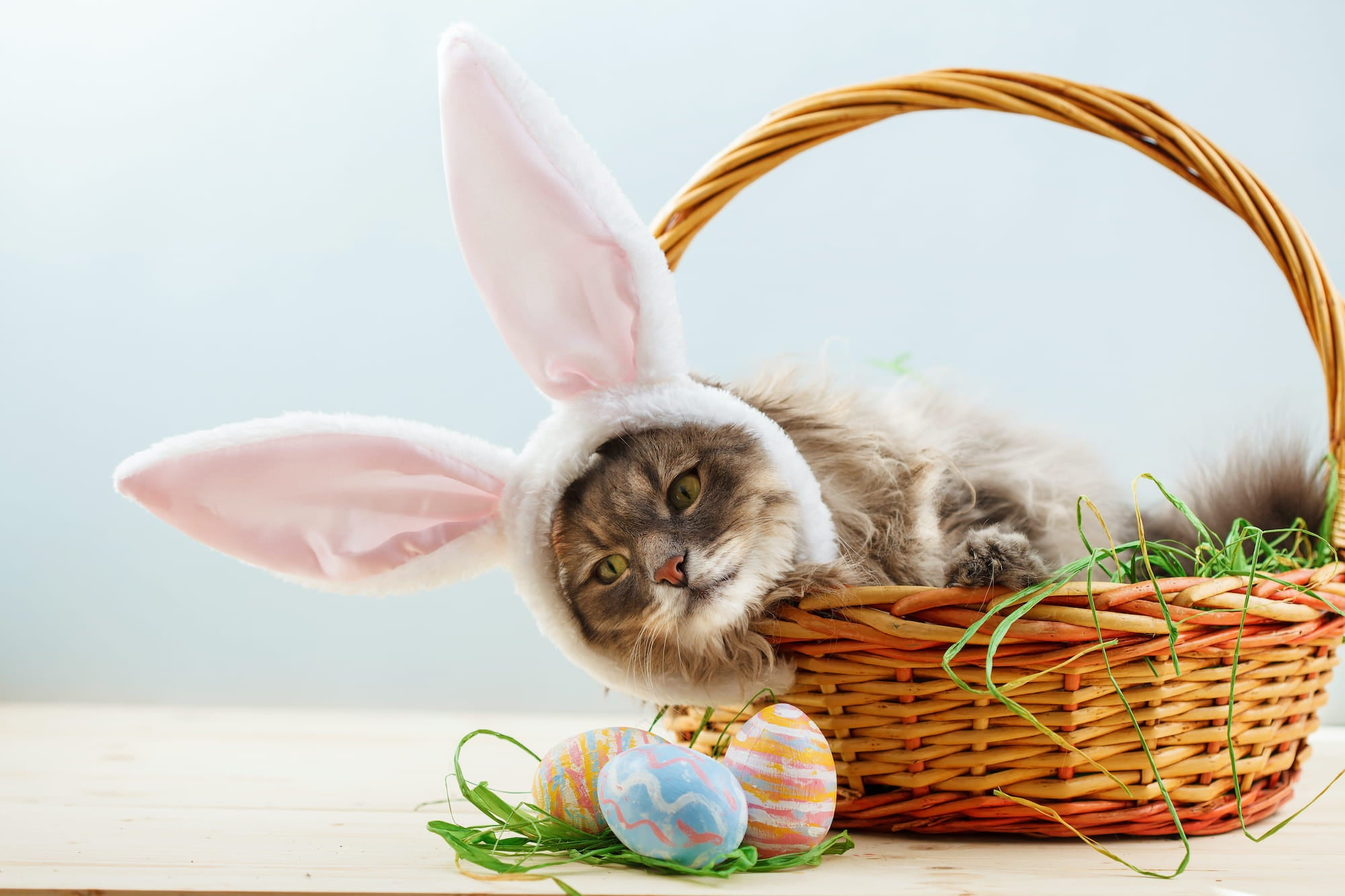 Cat wearing bunny ears and sitting in an Easter basket.