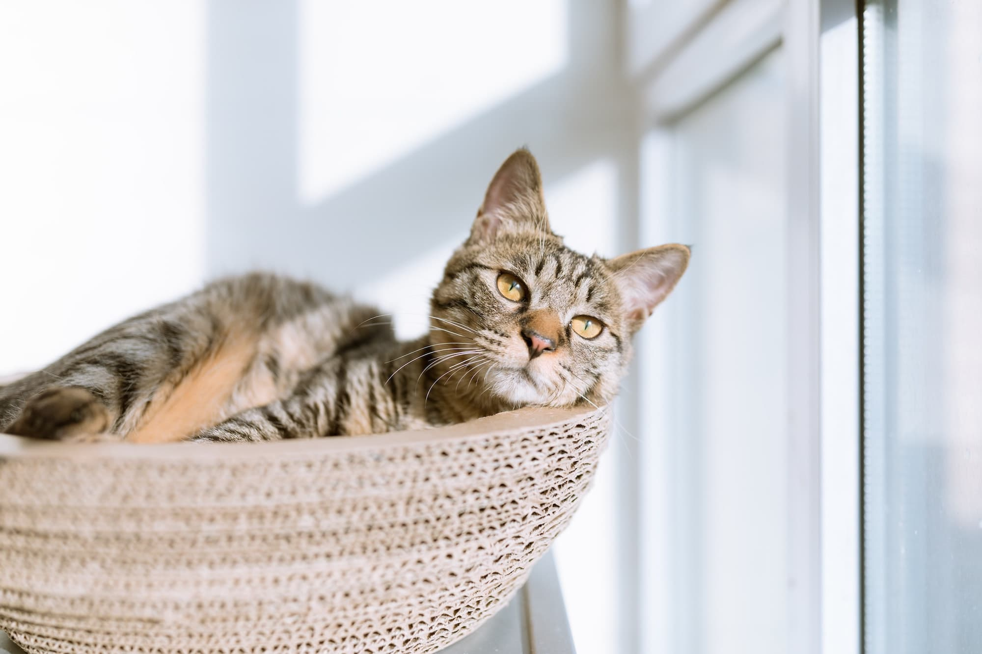 Cat lying in their lounger