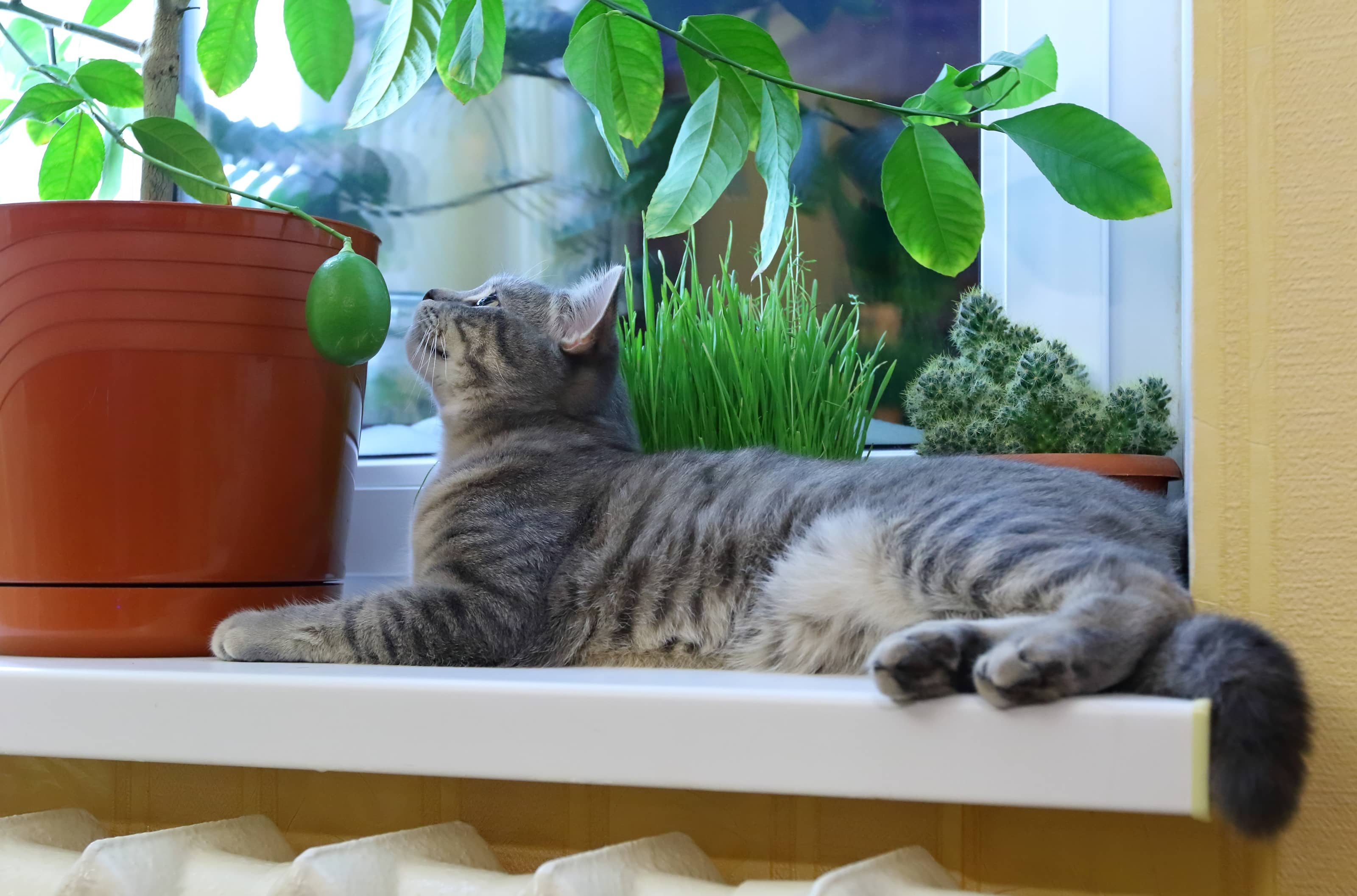 cat sitting on a windowsill next to houseplants