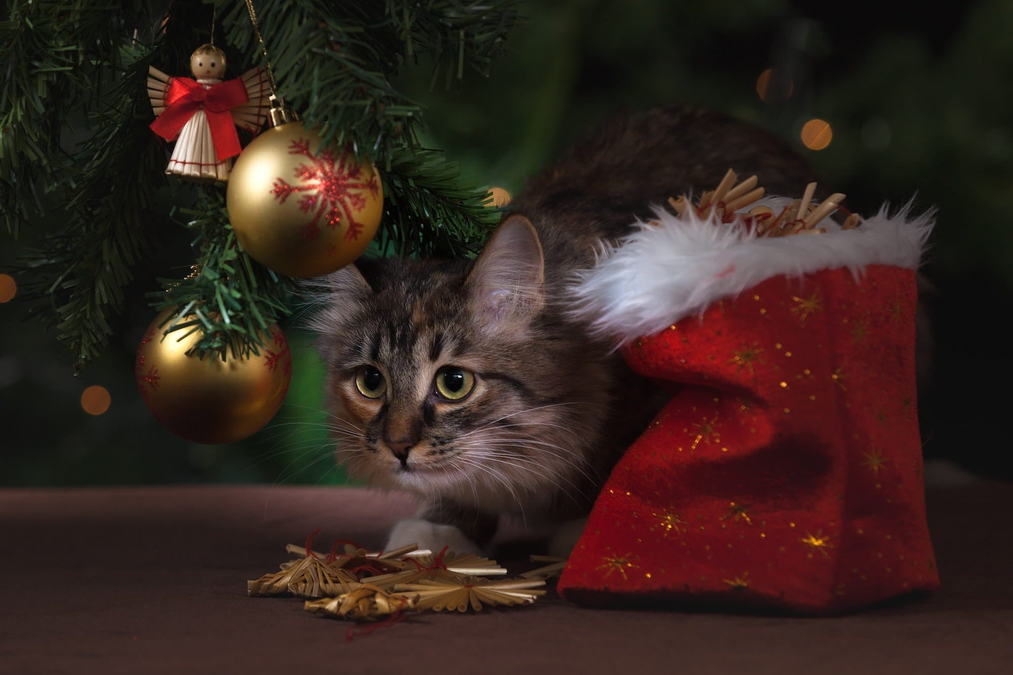 Cat sitting under the christmas tree surrounded by baubles and a christmas sack