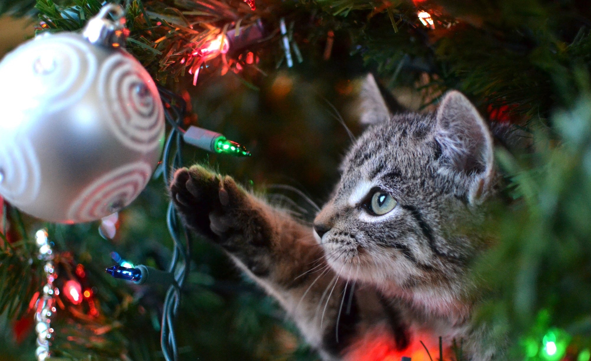 Cat hiding under a Christmas tree playing with a bauble