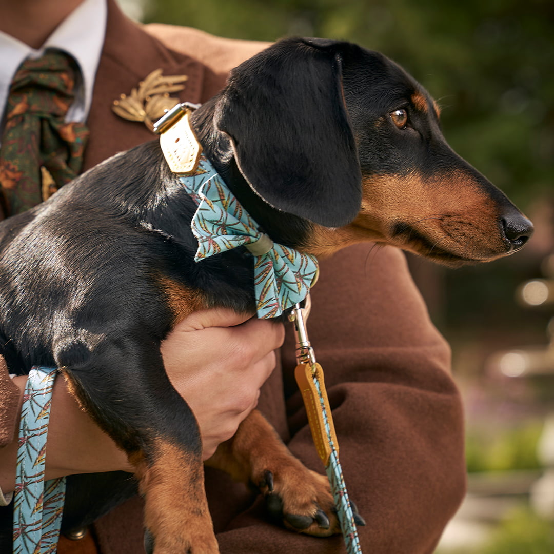 Hiro & Wolf x Lords & Labradors Stag Collection - dog collars and walking accessories