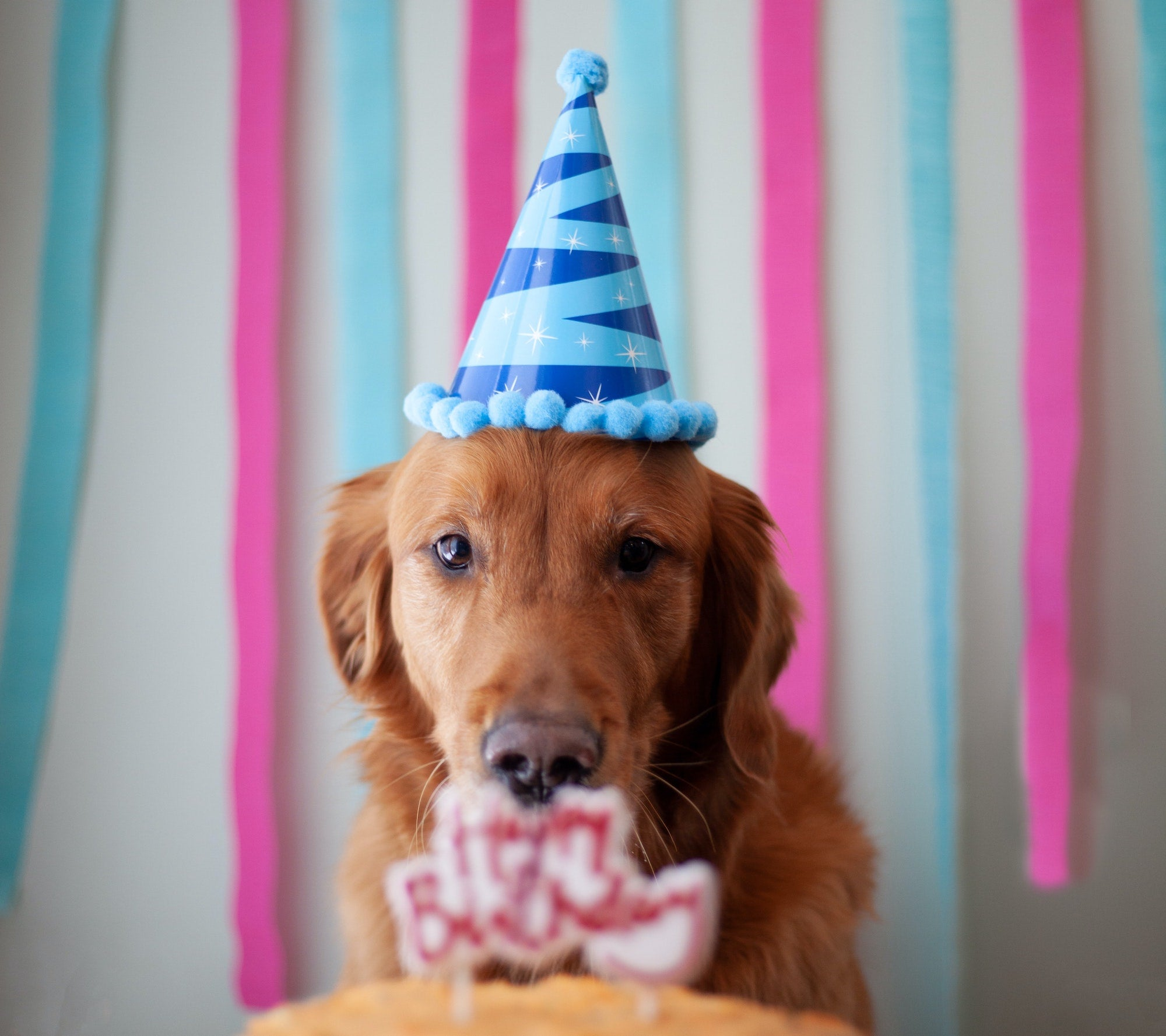 Golden retriever wearing a party hat in front of a birthday cake