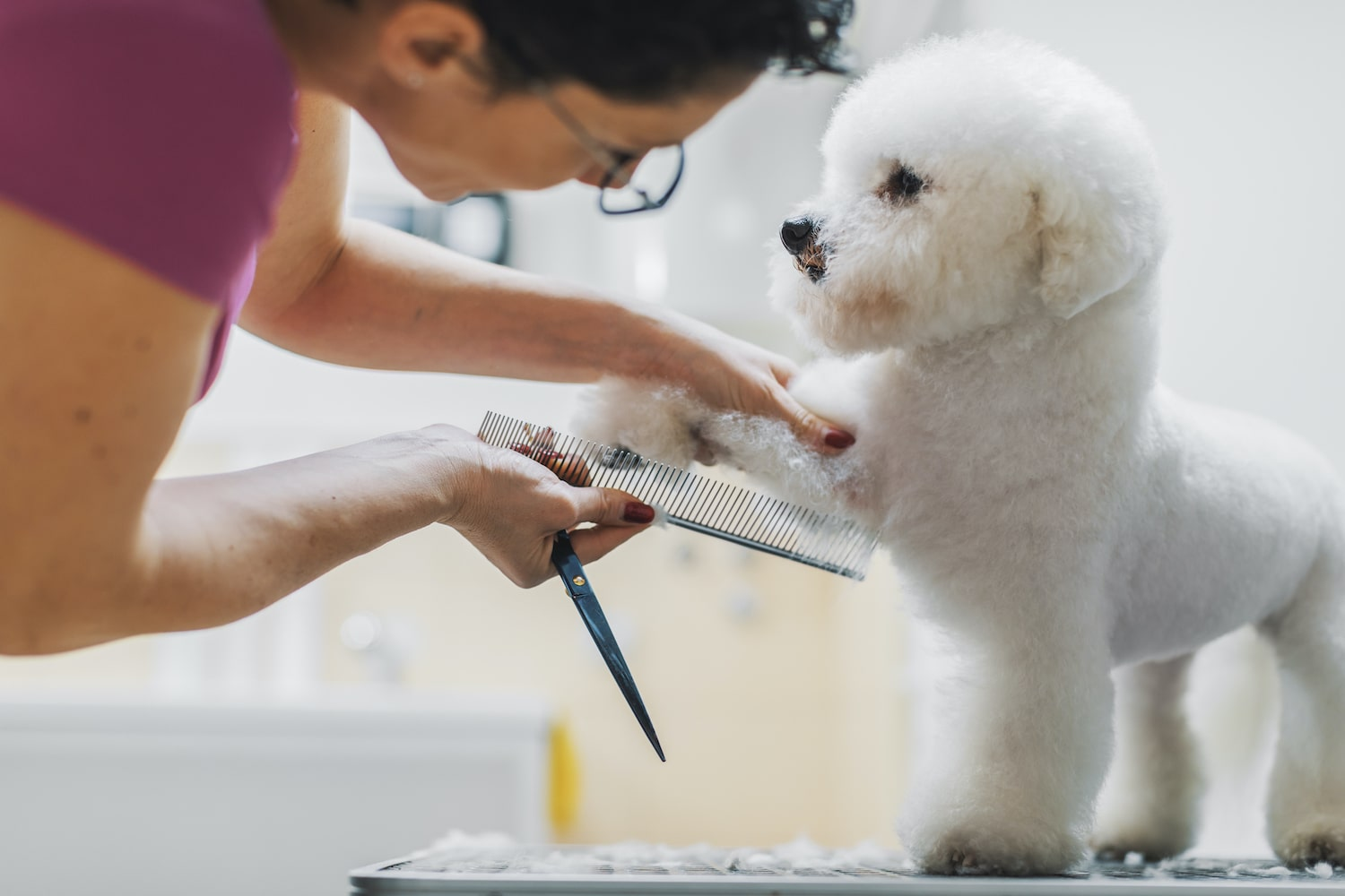 dog being groomed