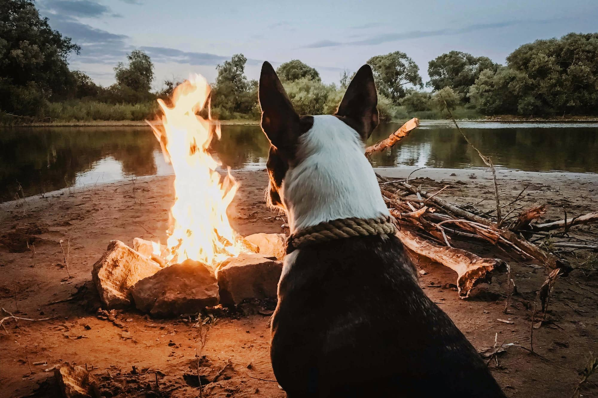 Dog sitting near the campfire on a camping trip