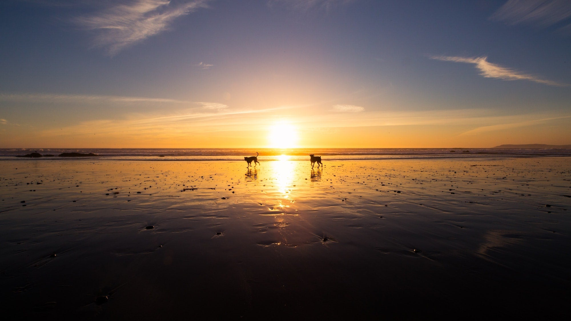 Two dogs playing on the beach at sunset