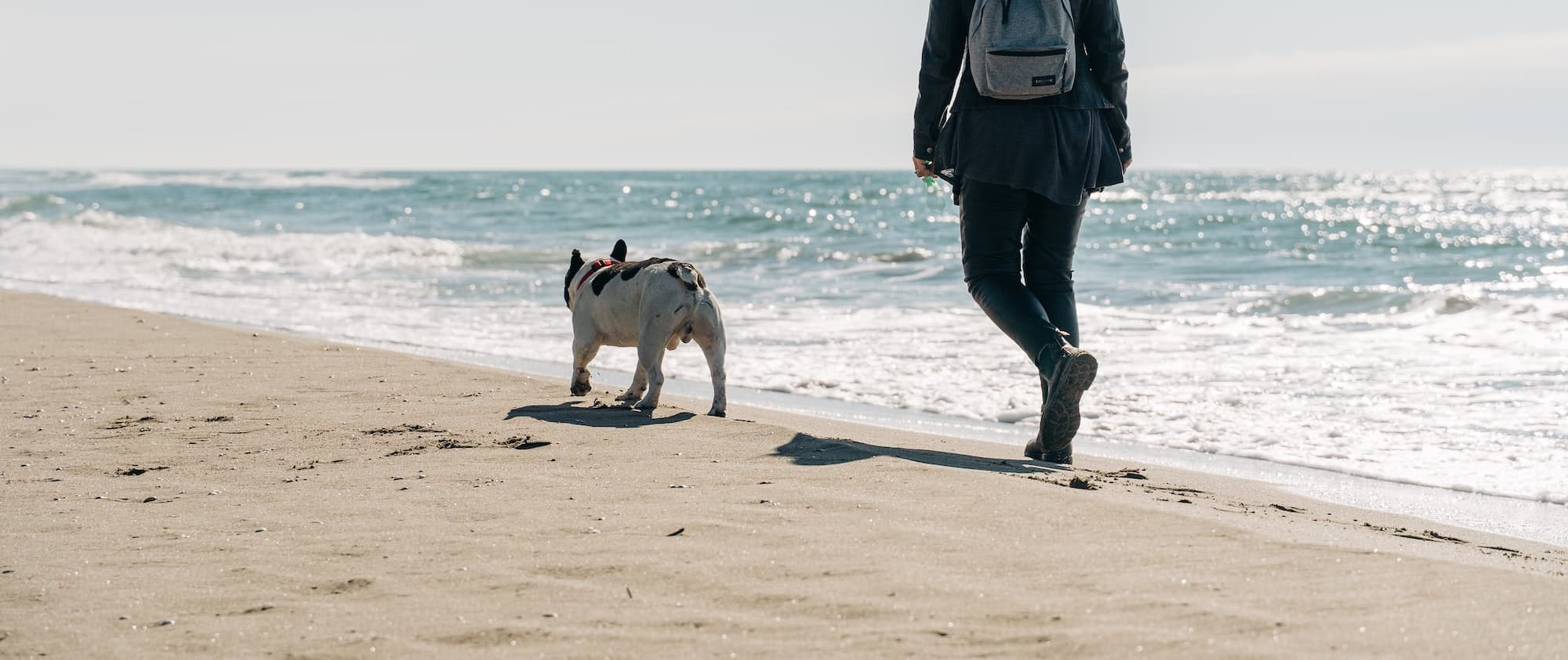 Dog owner and her dog walking on the beach