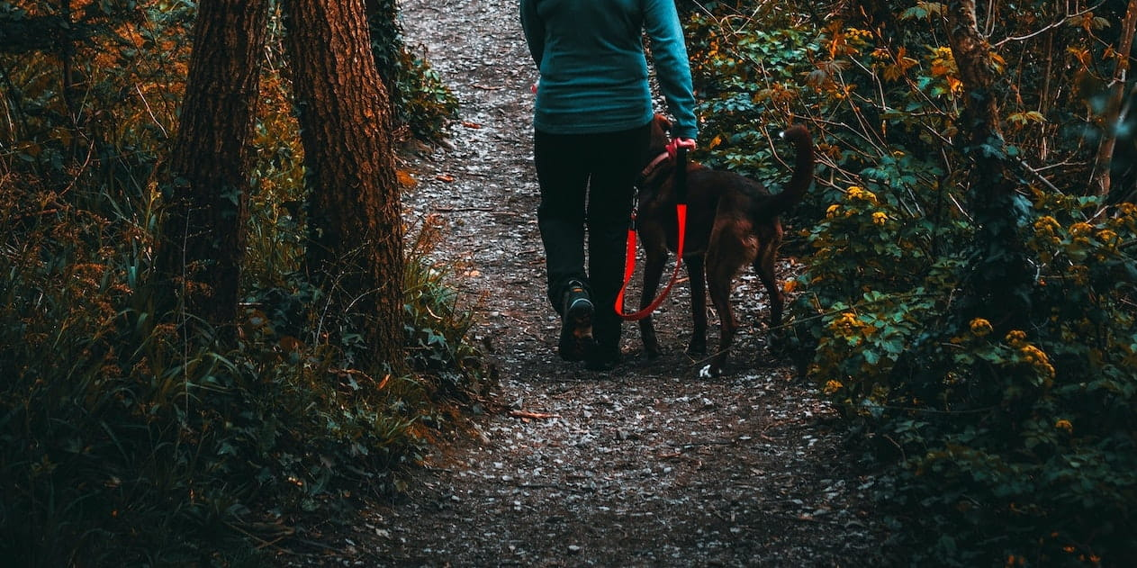 dog owner walks her dog on a lead in the woods