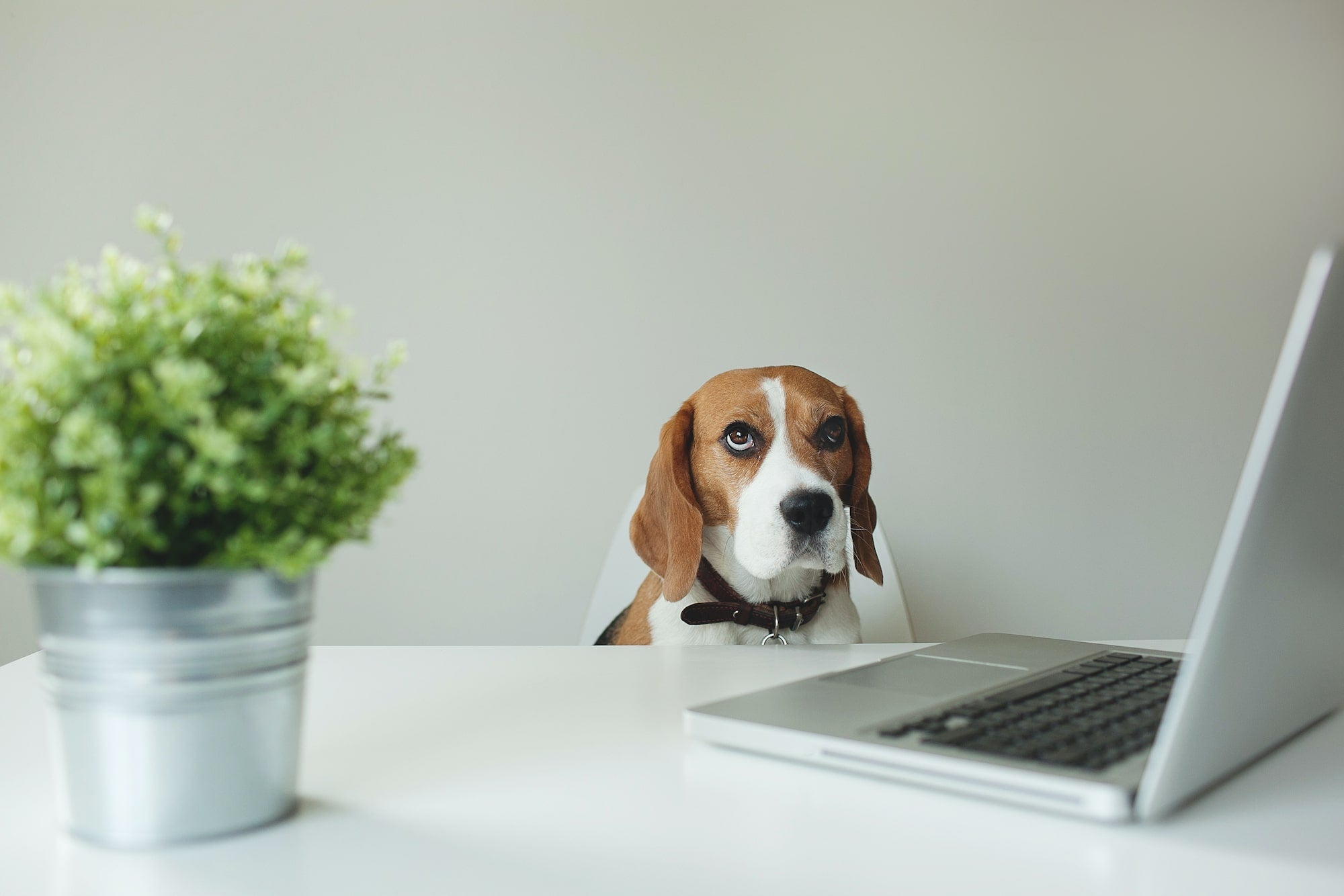 dog sitting at a table with a computer