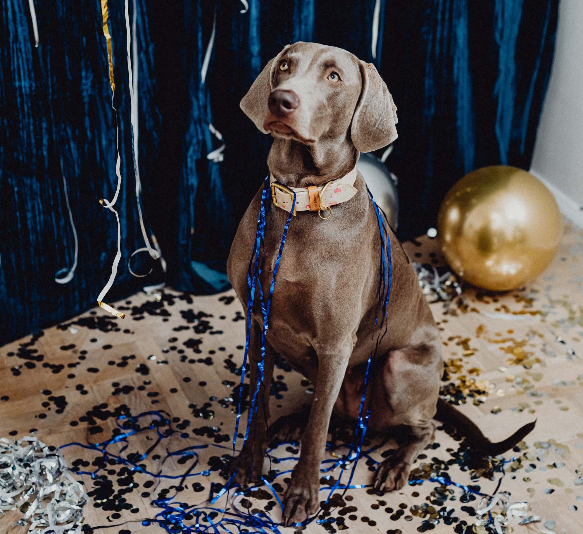 Dog at new year with party decorations