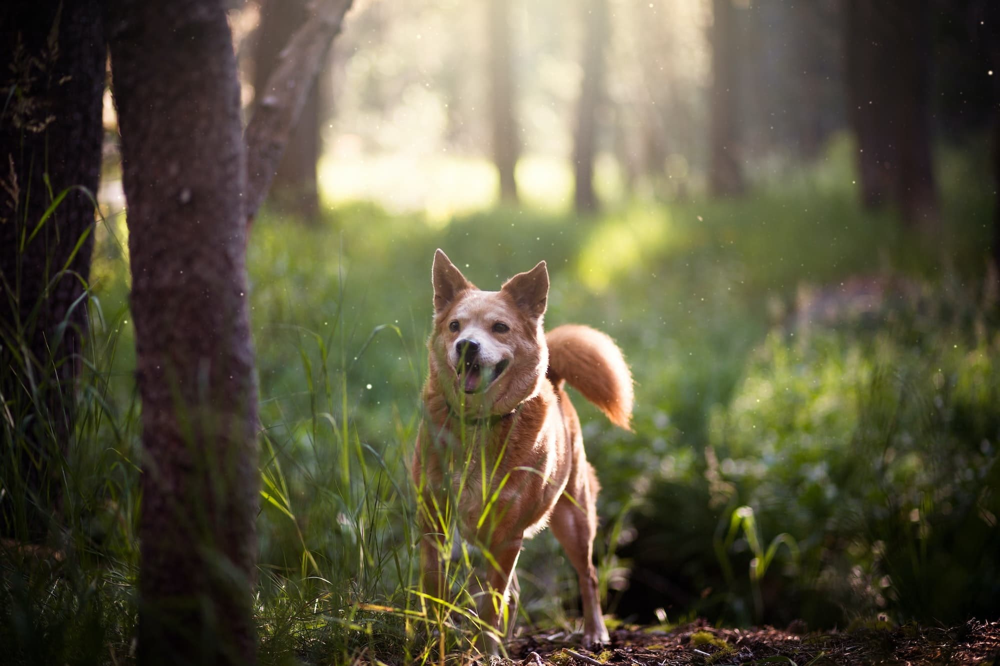A dog on walk in the woods
