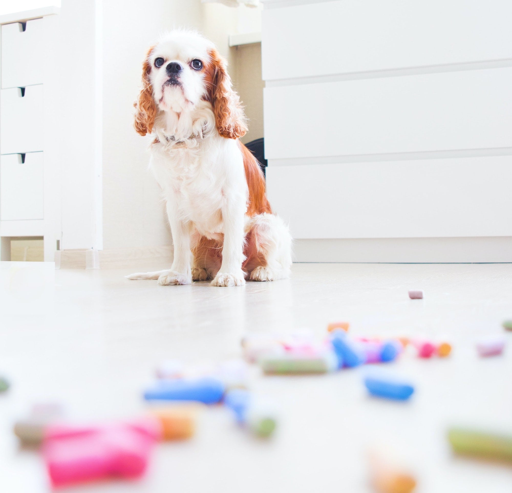 dog sits with toys all over the floor