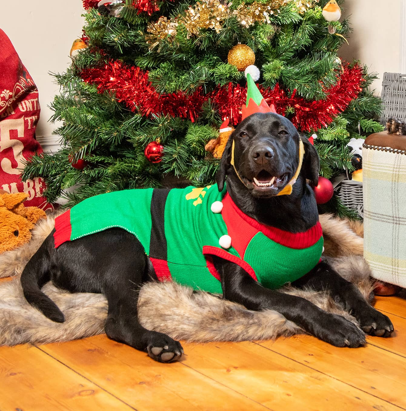dogs elf dressing up costume - elf Christmas jumper for dogs