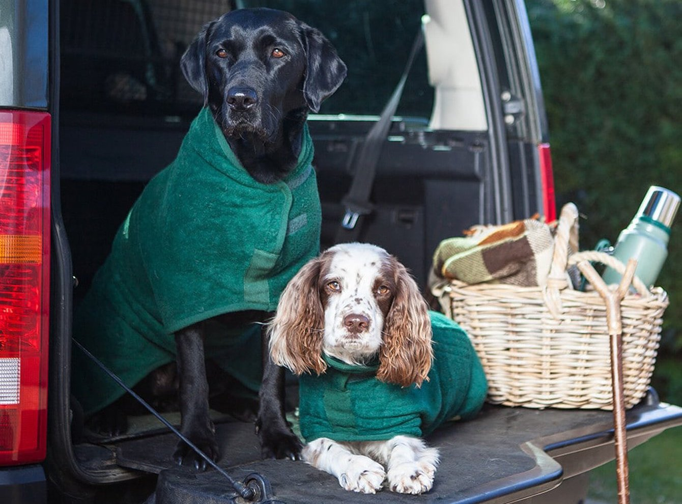 dogs in the back of Landrover wearing dog drying robes by Ruff & Tumble