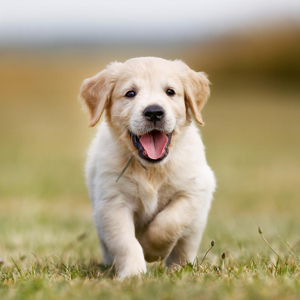 Everything You Need for Your New Puppy [image: https://cdn