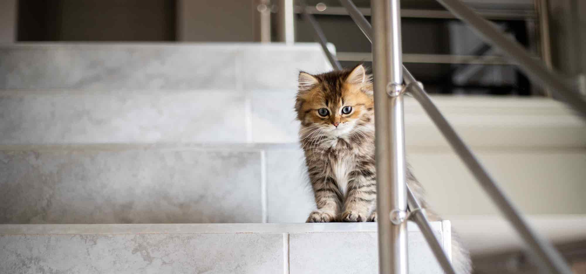 indoor cat on the stairs