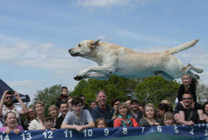 All For Dogs Show