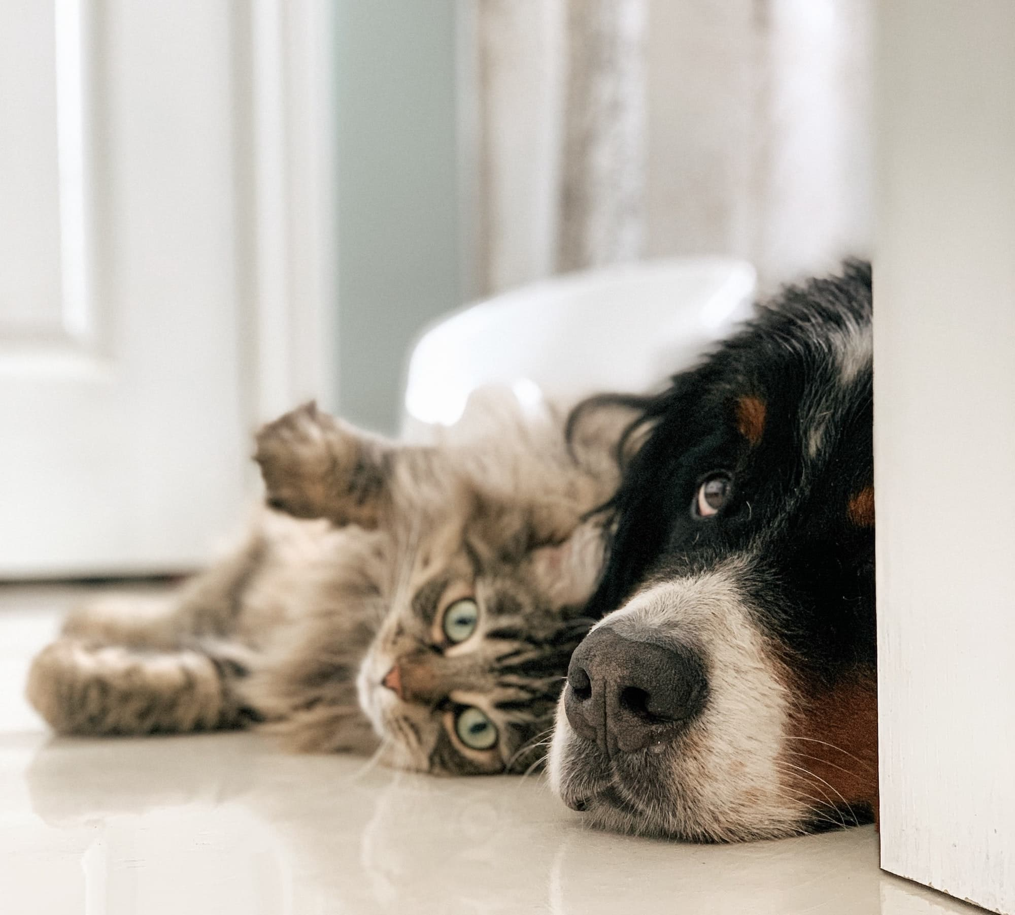 A cat and dog cuddle up indoors