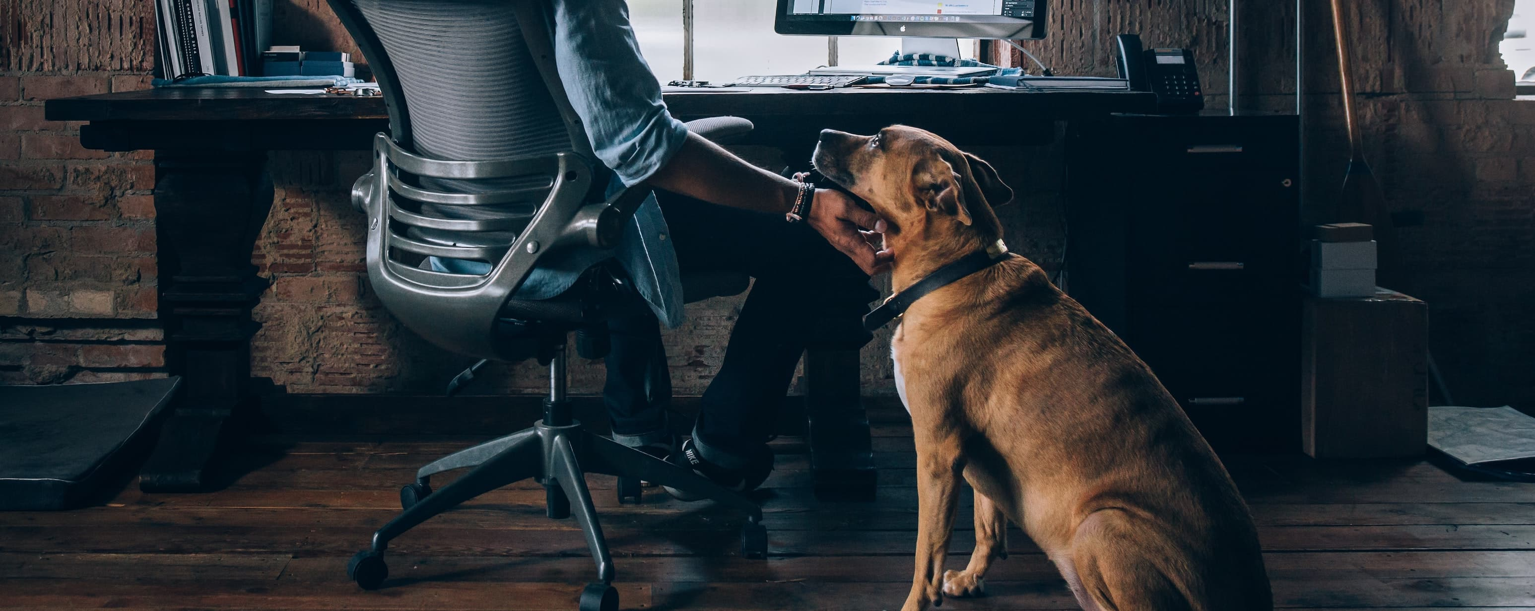 man werking from home with his dog in his home office