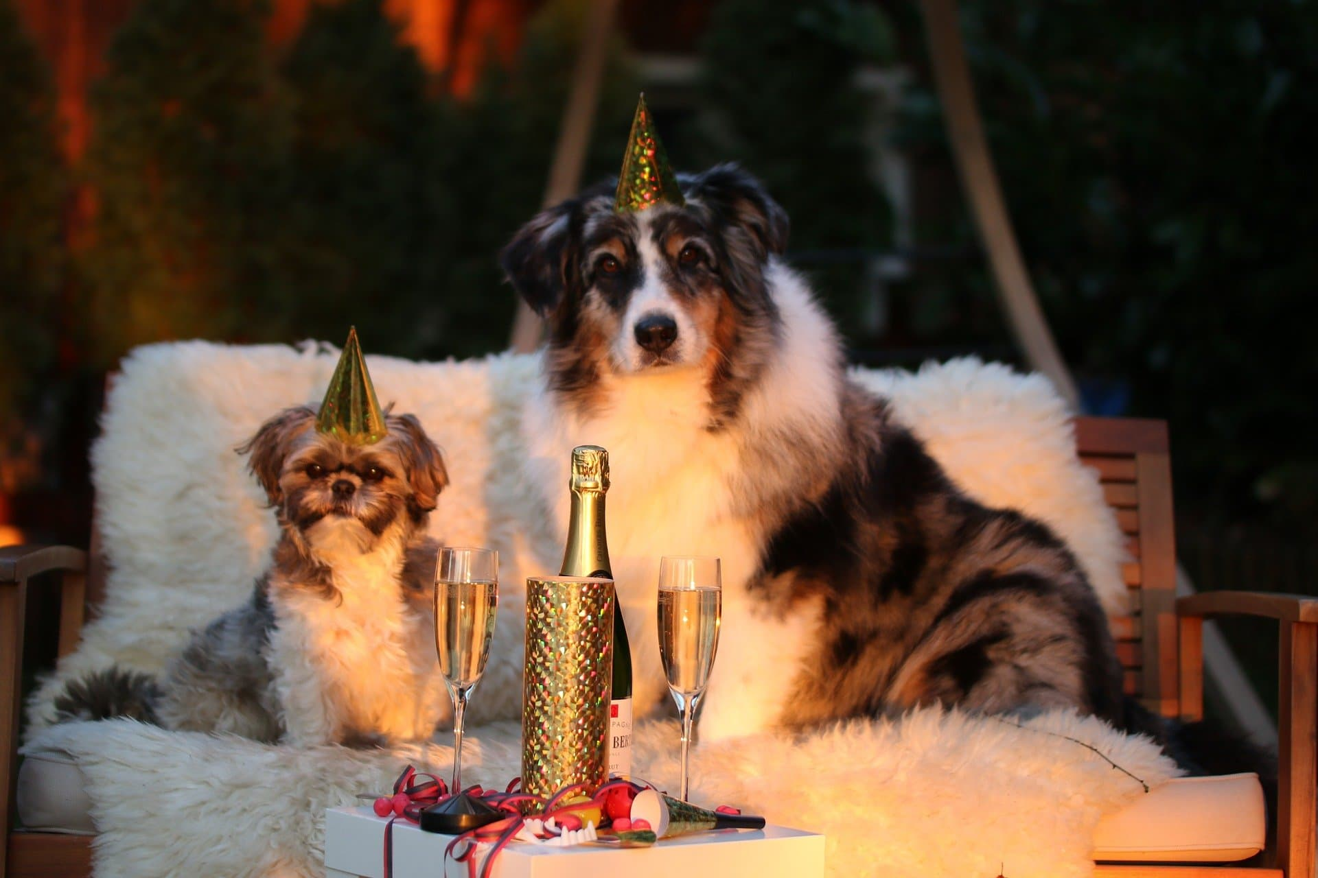 Two dogs wear party hats for New Year
