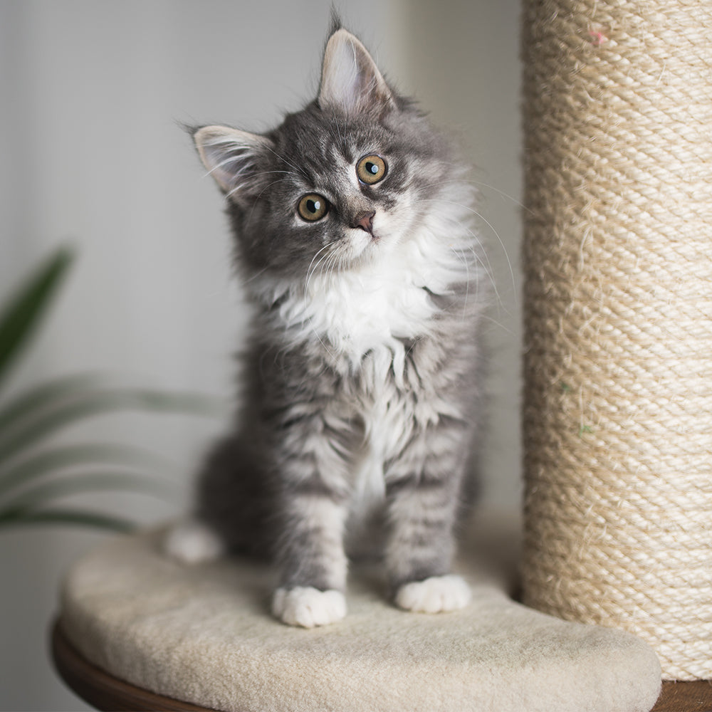 Everything You Need for Your New Kitten [image: https://cdn