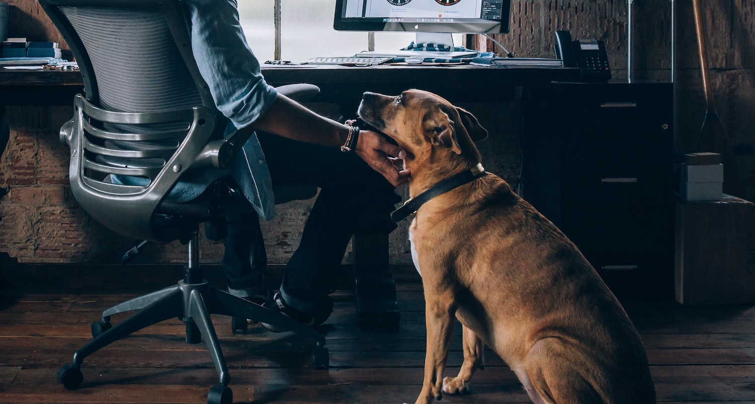 Dog sitting an office with his owner