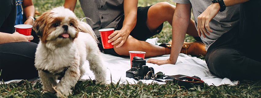 Dog with his owner and friend having a picnic
