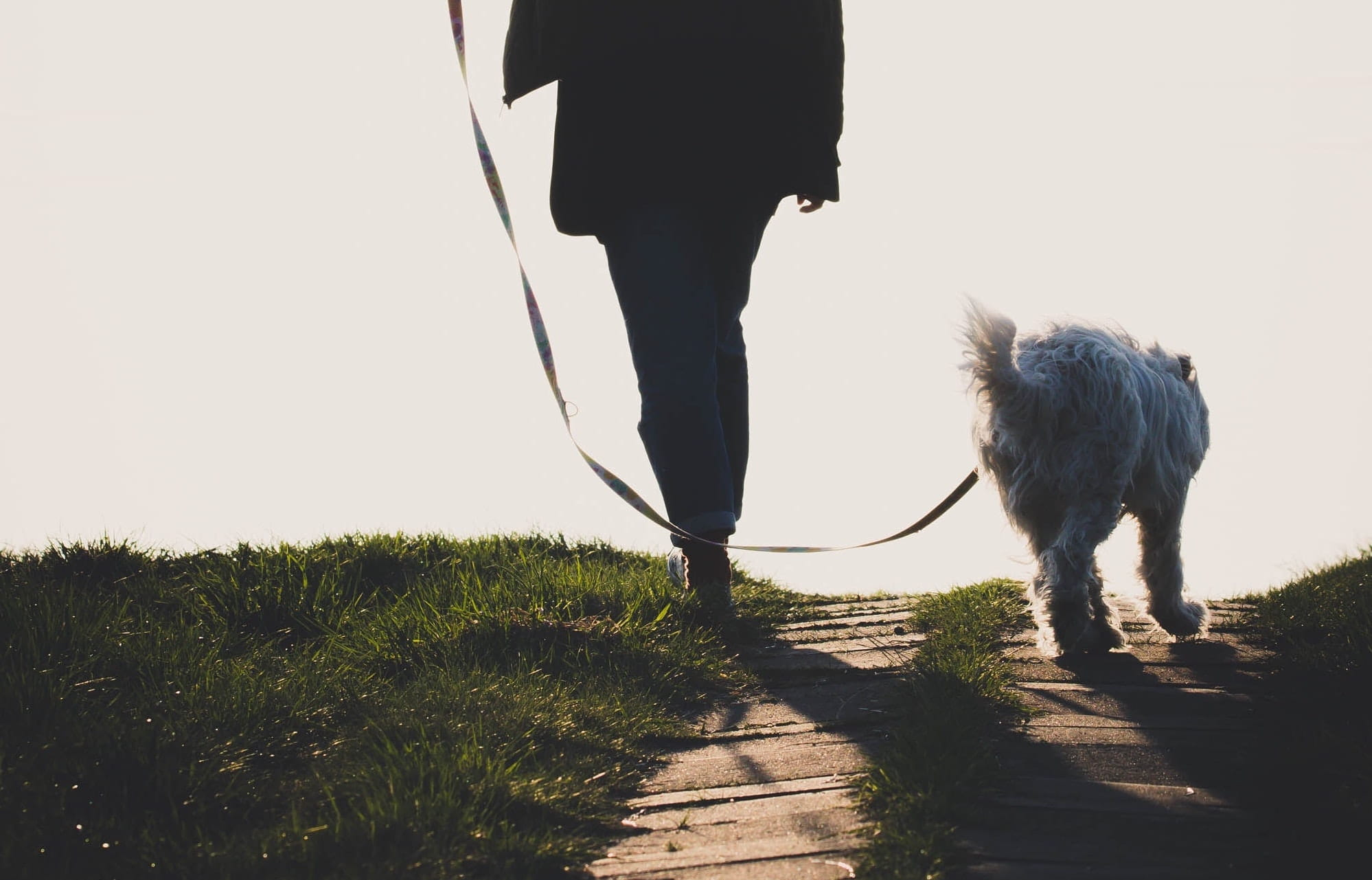 dog owner on a dog walk with her pup.