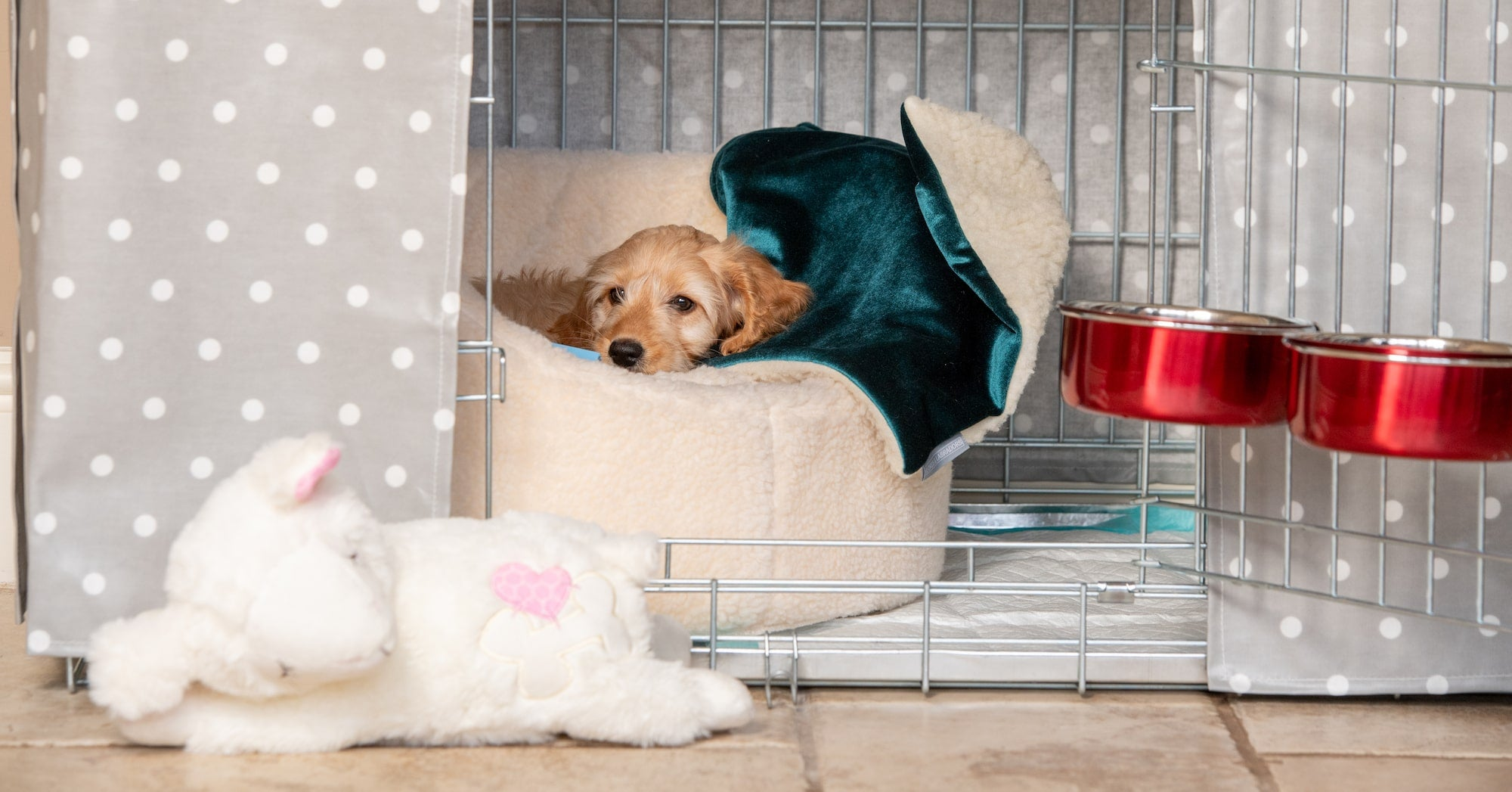 Cockapoo puppy in a dog crate with puppyy bed, blanket and water bowl