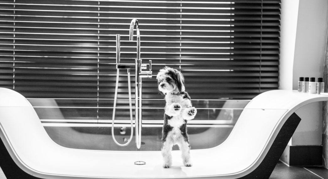 South Place Hotel - dog in a bath