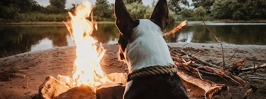 Dog sits in front of a campfire