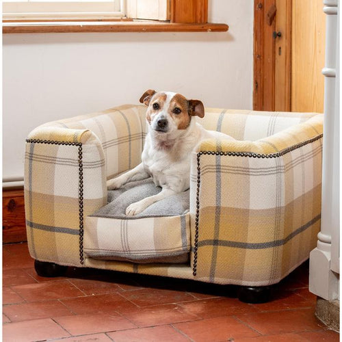 ochre ash tweed Chesterfield for dogs