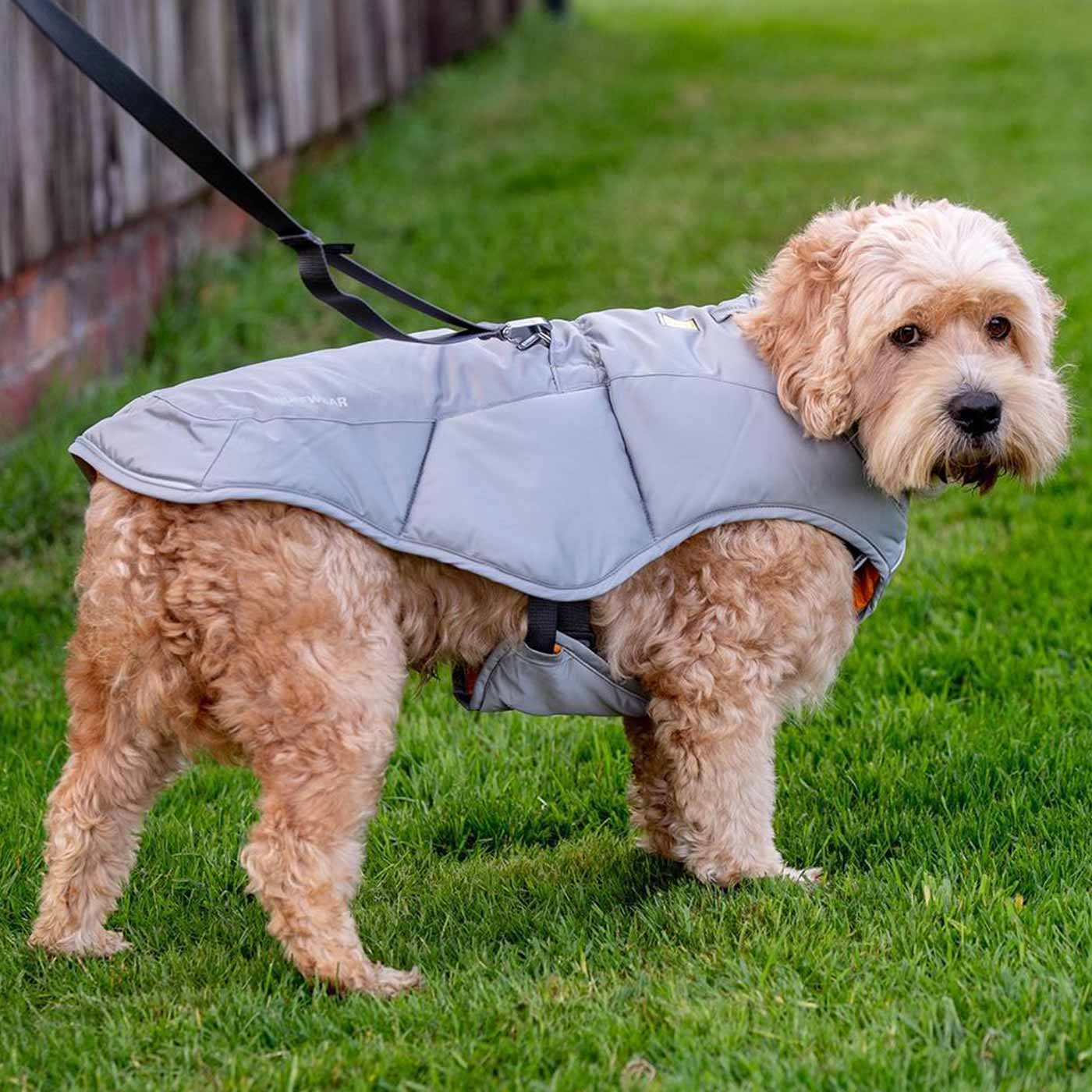 Cockapoo dog wearing the Ruffwear Qunizee Insulated Jacket for dogs in grey - Winter dog coat