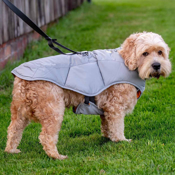 ruffwear quizze dog jacket
