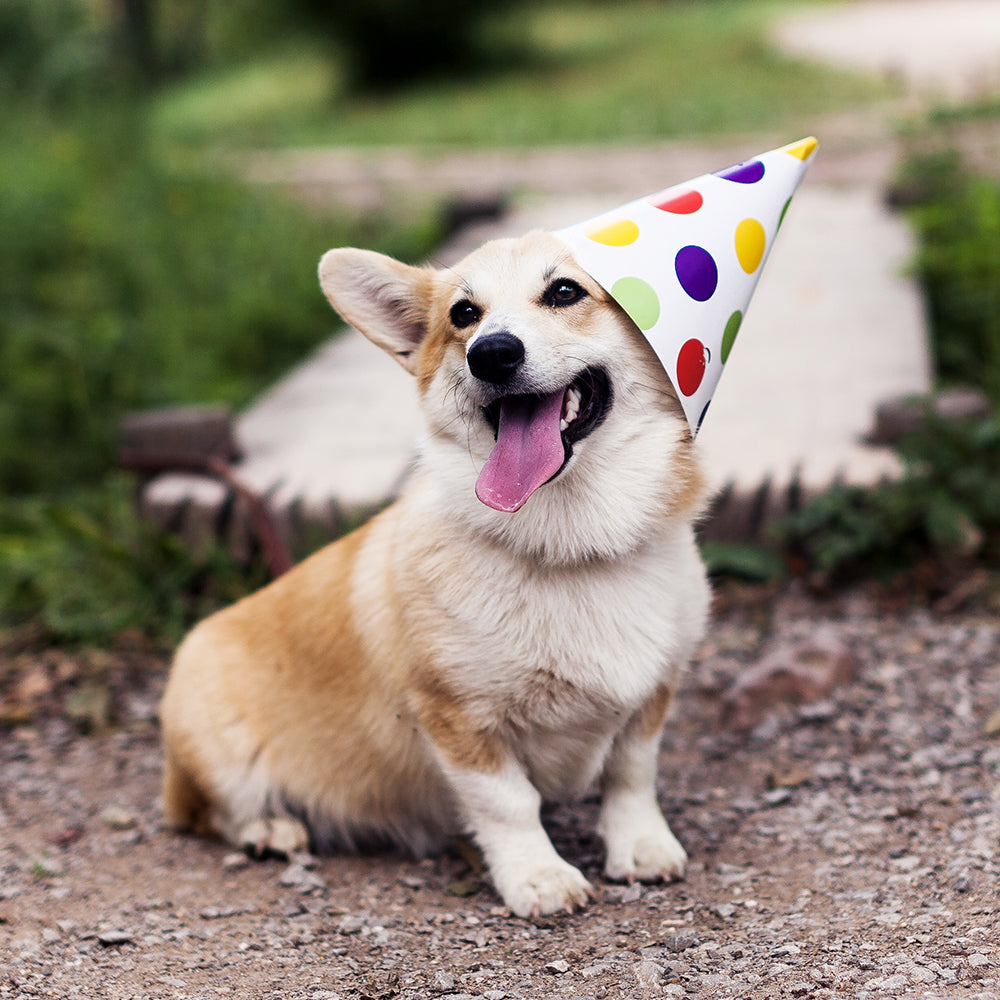 dog birthday pack