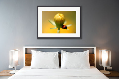 Go 'Big & Bold' when you want to create impact with wall art
