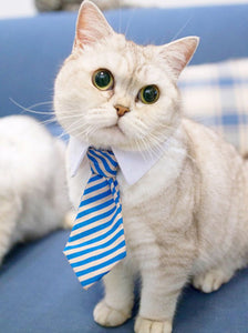 Striped Pet Tie -  Sport Pet Shop