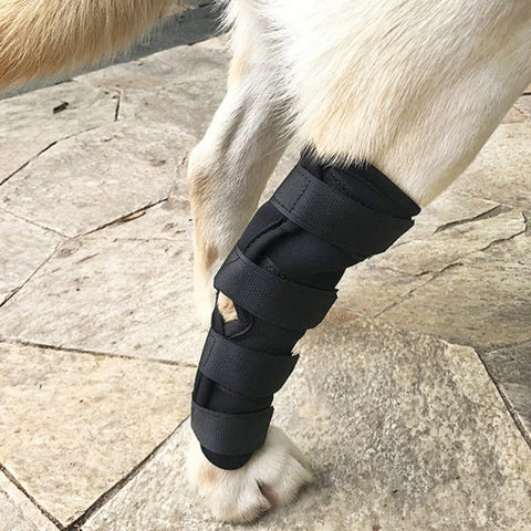 Image of Dogs Injured Leg Protector Bandages -  Sport Pet Shop