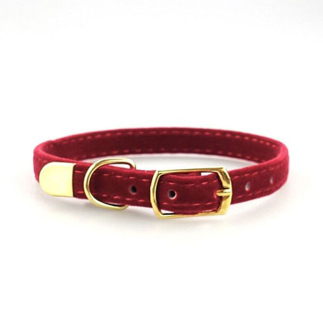 Cat Puppies Collar -  Sport Pet Shop