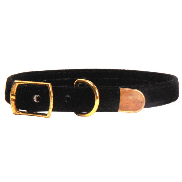 Cat Puppies Collar