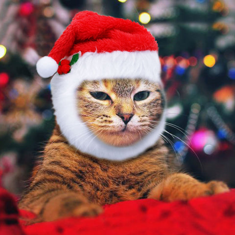 Image of Christmas Hat for Dogs /Cat -  Sport Pet Shop