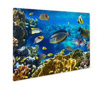 Load image into Gallery viewer, Metal Panel Print, Photo Of A Tropical Fish On A Coral Reef