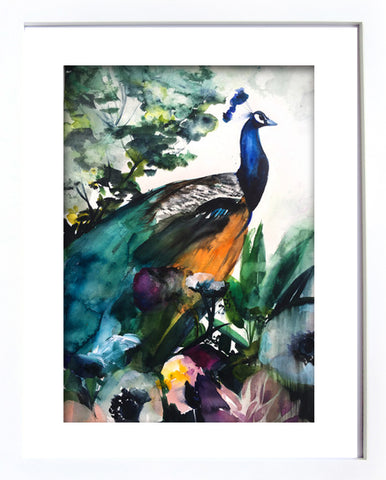 Peacock Garden Framed Print in White