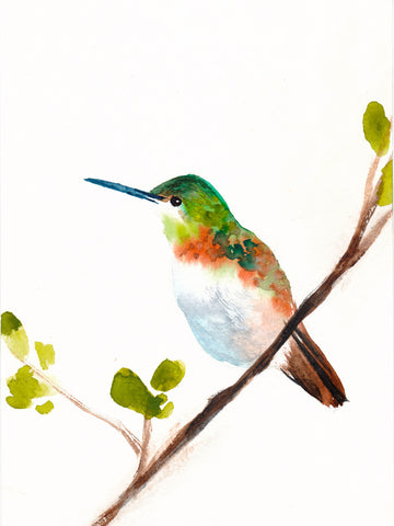 Hummingbird Art Print - Mai Autumn - Artwork