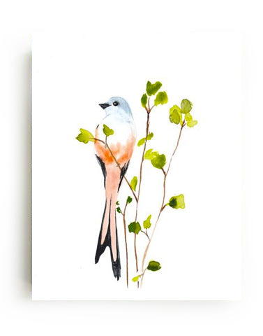 Scissortail Canvas Print
