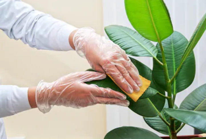 How to clean and care for your artificial plants